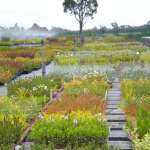 Plants Bunbury | Waterwise Gardens