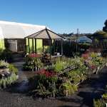 Plants Bunbury | Bunbury Plant Nursery